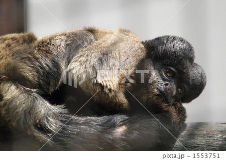 ヒゲサキ 猿の写真素材 - PIXTA