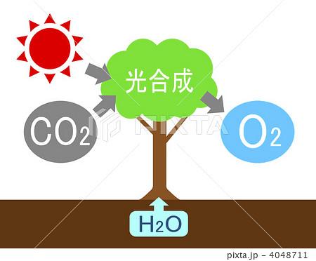 同化 作用 炭酸