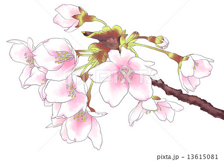 桜:水彩風 手書き
