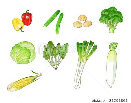 野菜 新鮮 手書き ほうれん草のイラスト素材 Pixta