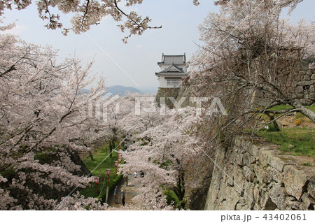 岡崎藩の写真素材 - PIXTA