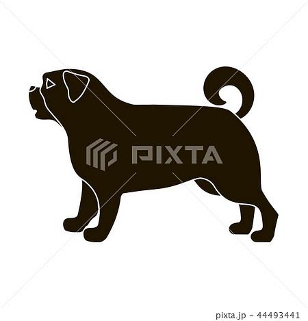 犬 パグ 黒パグ 中国犬のイラスト素材 Pixta