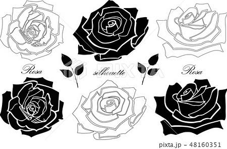 薔薇 イラスト 影 モノクロの写真素材 Pixta