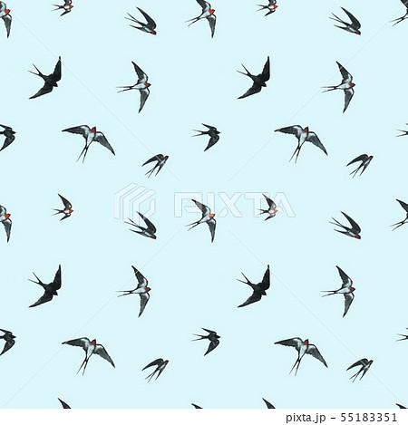 bc509072fd18e swallows Illustrations - PIXTA